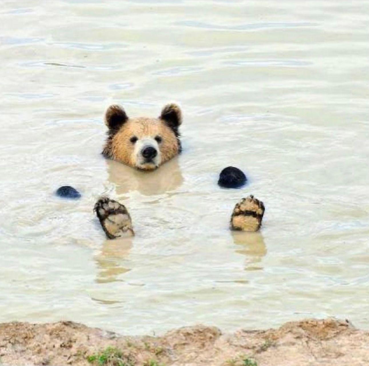 bear reference photo